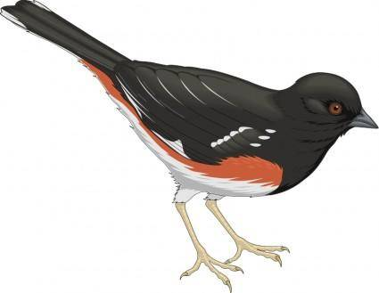 free vector Bird 11