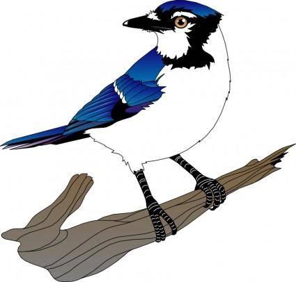 free vector Bird 10