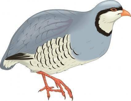 Bird 63