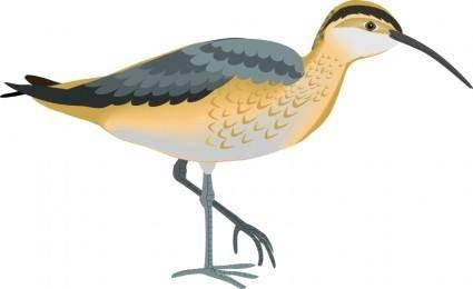 free vector Bird 62