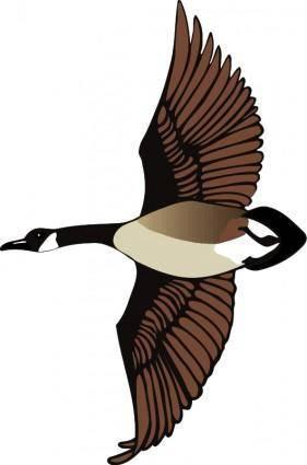 Bird 61