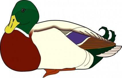Bird 58