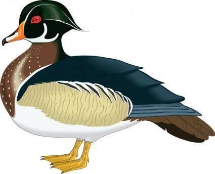 Bird 57