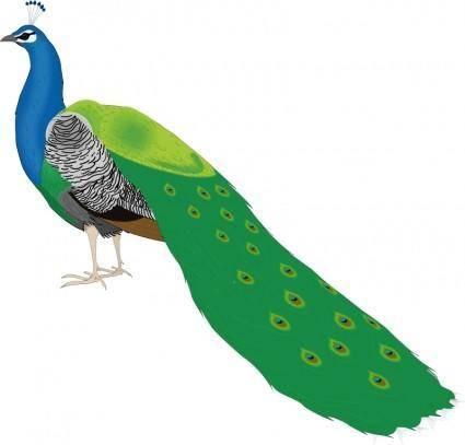 Bird 55