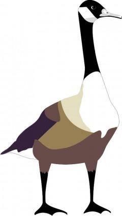 Bird 49