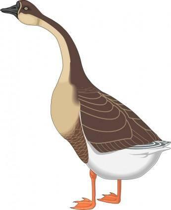 Bird 48
