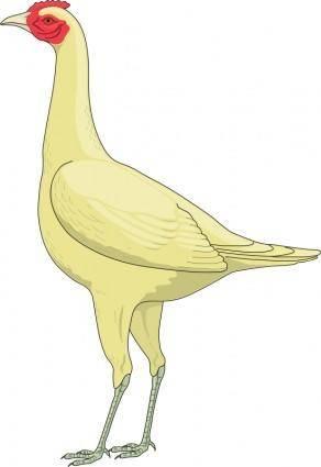 Bird 44