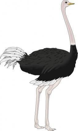 Bird 40