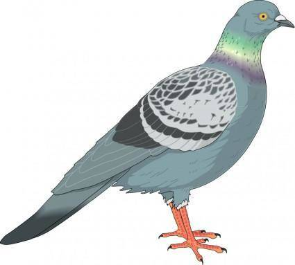 Bird 69