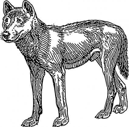 free vector Dingo