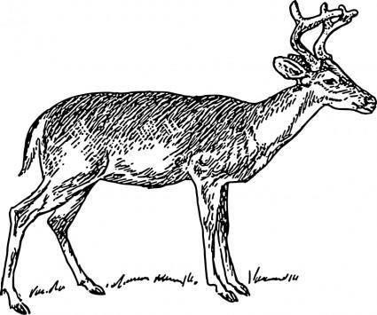 free vector Deer 1