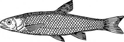 free vector Dace