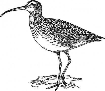 free vector Curlew