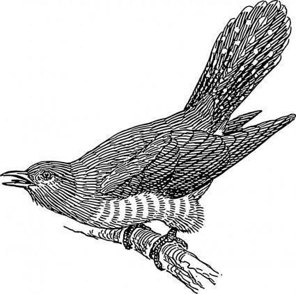 free vector Cuckoo