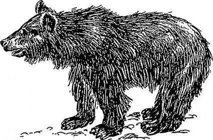 free vector Bear cub