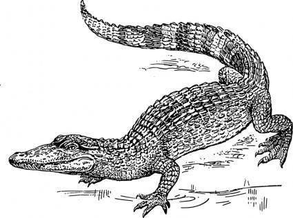 free vector Crocodile