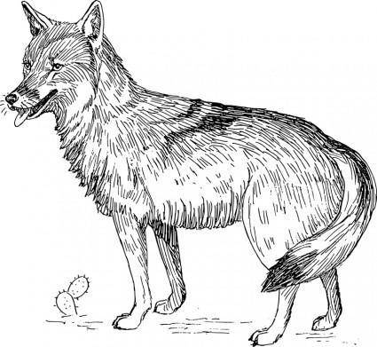 free vector Coyote