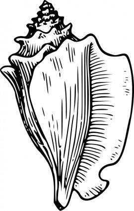 free vector Conch