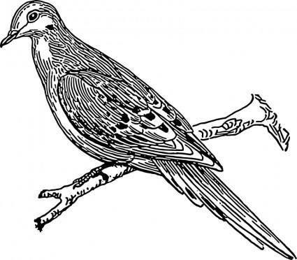 free vector Dove