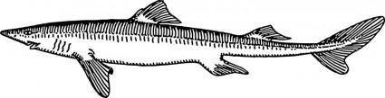 free vector Dogfish