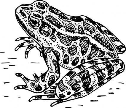 free vector Frog