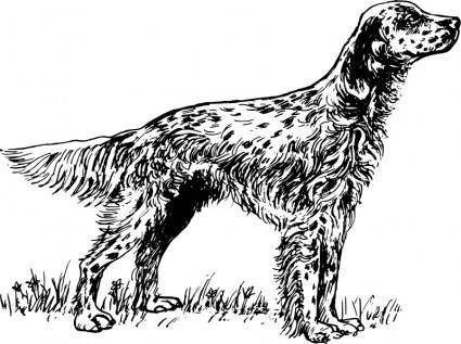 free vector English setter bw