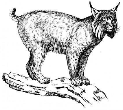 free vector Lynx
