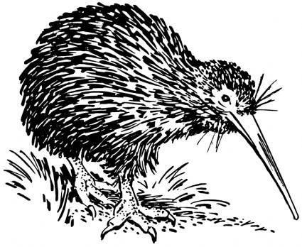 free vector Kiwi
