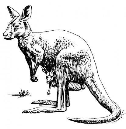 free vector Kangaroo