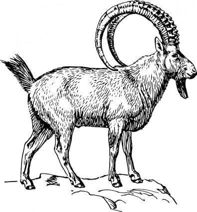 free vector Ibex