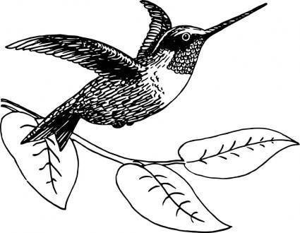 free vector Hummingbird