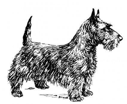 free vector Scotch terrier bw