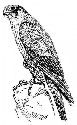 free vector Peregrine falcon