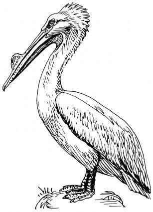 free vector Pelican