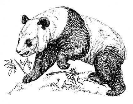 free vector Panda
