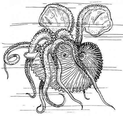 free vector Nautilus