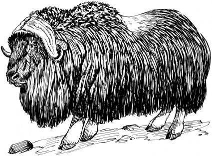 free vector Musk ox