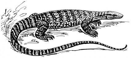 free vector Monitor lizard
