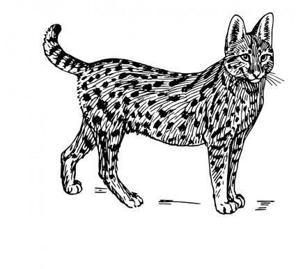 free vector Serval