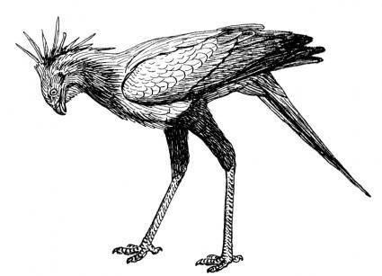 free vector Secretary bird