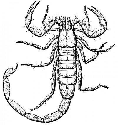 free vector Scorpion