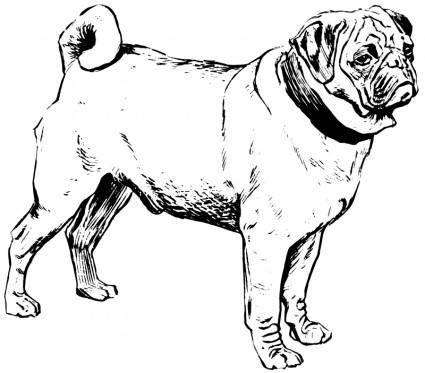 free vector Pug