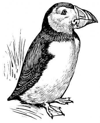 free vector Puffin