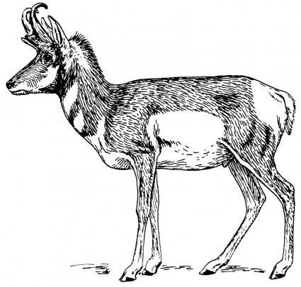 free vector Pronghorn