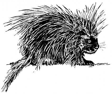 free vector Porcupine