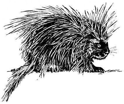 free vector Porcupine