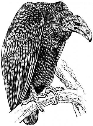 free vector Vulture