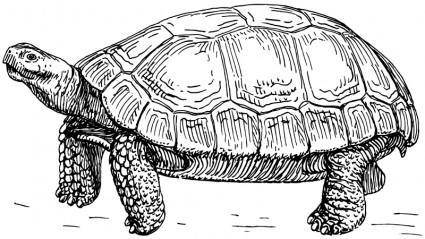 free vector Tortoise