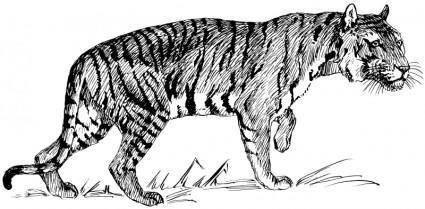 free vector Tiger 2