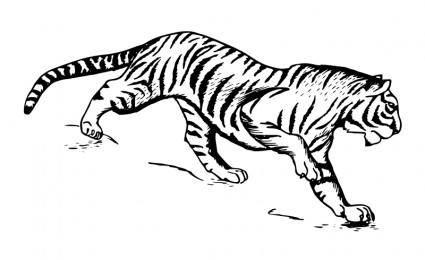 free vector Tiger 1